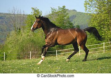 pâturage, cheval