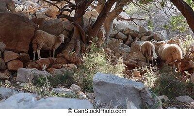 pâturage, peu, été, vue, mouton