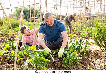 père, travail, préadolescent, garçon, portion, jardin, légume