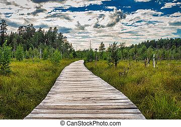 pédagogique, lituanie, marche, piste, kaunas, trail., randonnée