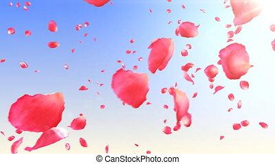 pétales, rose, hd., voler, sky.