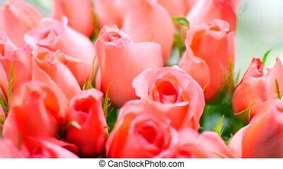pêche, bouquet, grand, doux, roses, close-up.