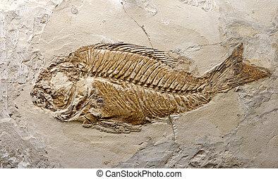 pêchez fossile