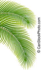 palmier, feuilles, arrière-plan., blanc
