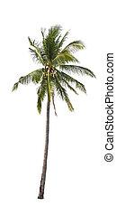 palmier, isolé, noix coco, arrière-plan., blanc