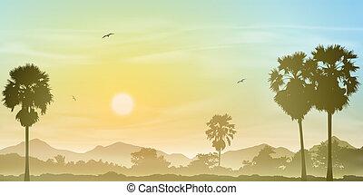 palmier, paysage