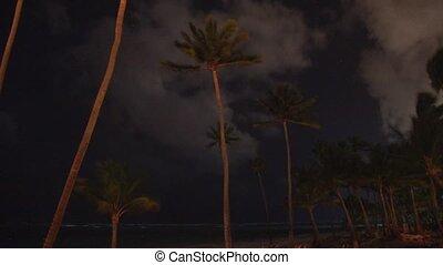 palmiers, nuit