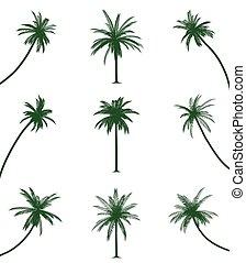 palmiers, vert