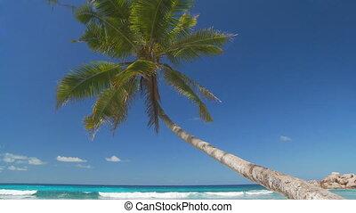 palmtree, paradis