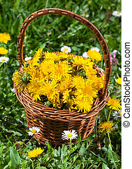 panier, recueilli, fleurs, pissenlit