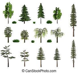 panneau affichage, été, blanc, arbres, collection