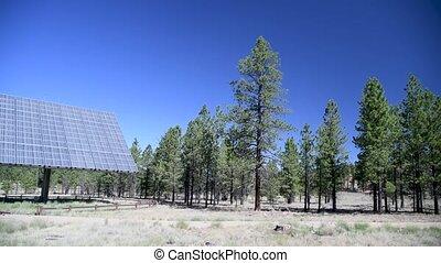 panneaux, forêt, propre, concept, énergie solaire