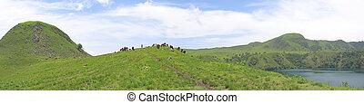 panorama., collines, quelques-uns, -, buffle, afrique, vaches, herbe, camerounais