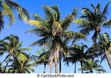 papier peint, palmiers, fond
