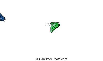 papillon, 4, animation