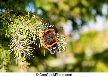 papillon, arbre, noël