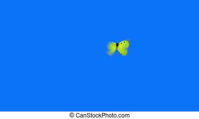 papillon, bleu, voler, arrière-plan vert