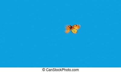 papillon, bleu, voler, fond, orange