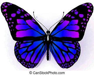 papillon, dos, isolé, blanc