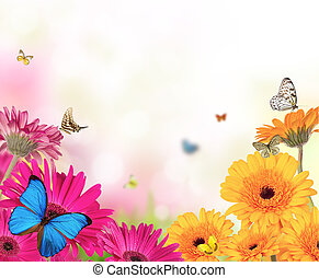 papillons, fleurs, gerber
