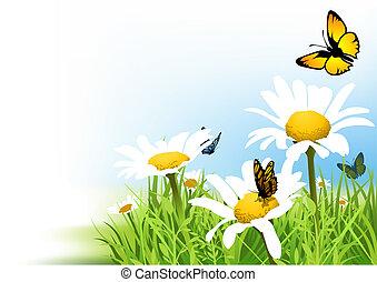 papillons, pâquerette