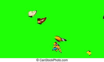 papillons, voler, arrière-plan vert