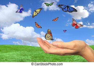 papillons, voler, joli, gratuite