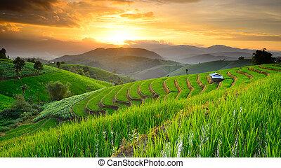 papongpieng, chiangmai, terrasses, coucher soleil, paysage, interdiction, thaïlande, riz, toile de fond