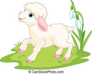 paques, agneau