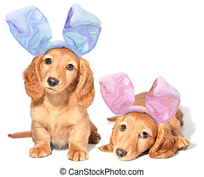 paques, chiots, lapin