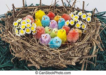 paques, coloré, poulets