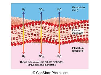 par, diffusion, plasma, membrane