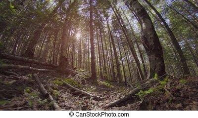 par, forêt, sauvage, mouvement