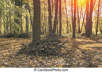 parc, automne, branches, tas, nettoyage
