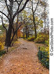 parc, automne, ville, promenade, par