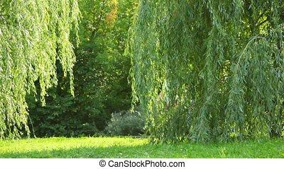 parc, derrière, arbre, famille, promenades