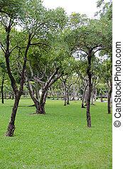parc, herbe, arbres verts
