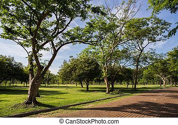 parc, herbe, champ vert
