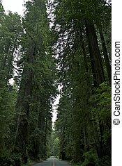 parc national, séquoia