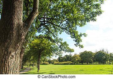 parc, pelouse, arbres verts
