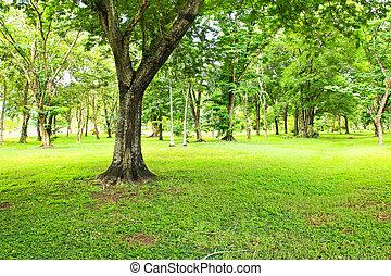 parc vert, arbres