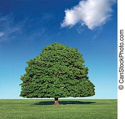 parfait, bleu, arbre, ciel