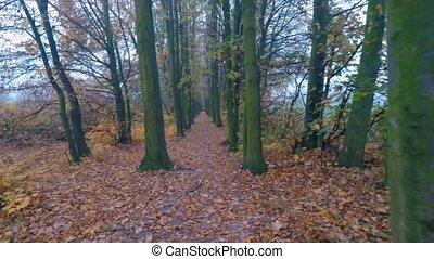 park., automne, route ville