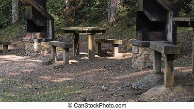park., entouré, bois, métal, tables, arbres, barbeque, pique-nique