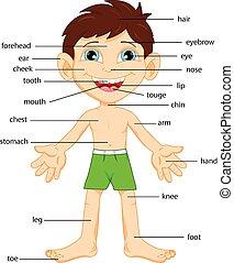partie corps, vocabulaire