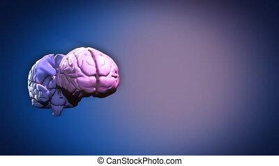 parties, cerveau, mis valeur