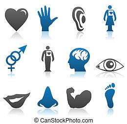 parties du corps, icônes