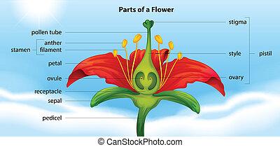 parties, fleur