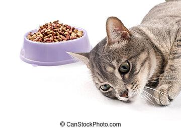 pas affamé, chat
