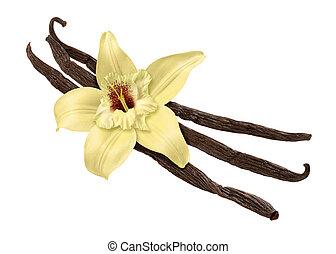 path), vanille, fleur, haricot, (clipping